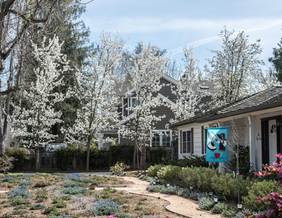 Post image for Flowering pear trees bid farewell to winter