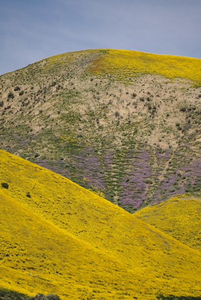 Betsy Sergeant Snow captures the wildflower glory at Carrizo Plain on spring break trip