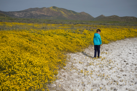 Post image for Betsy Sergeant Snow captures the wildflower glory at Carrizo Plain on spring break trip