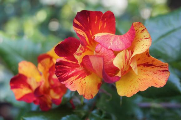 A second peek at Kathy Brenzel's rose-filled Menlo Park backyard