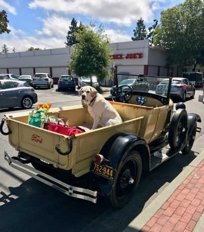 Spotted: Duke the dog riding high in 1928 Ford Model A