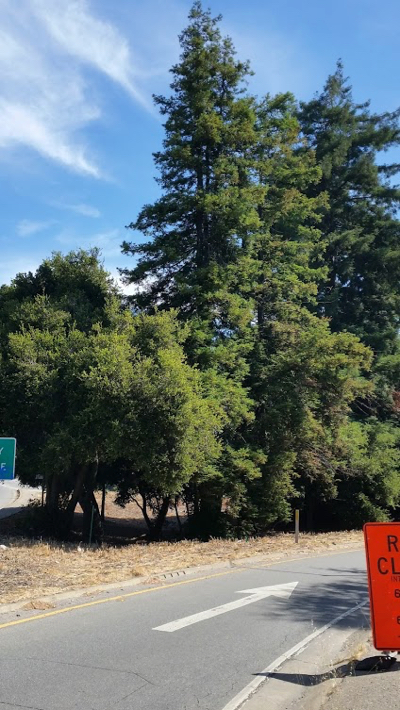 Menlo Park resident says goodbye to trees many locals may have taken for granted