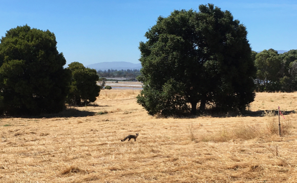 City of Menlo Park seeking more input in second survey about Bedwell Bayfront Park