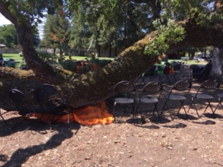 Dumbarton Bridge collision and fallen tree branch at Menlo College keep Menlo Park Fire personnel busy