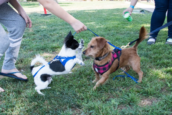 Post image for Dogs in action at second annual Paws for Paws event in Menlo Park