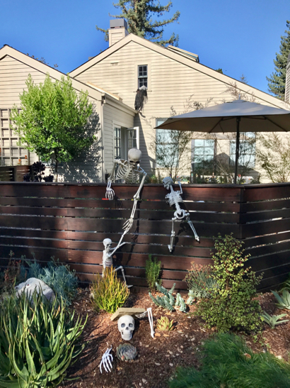 Post image for Spotted: Skeletons invading house on Bay Laurel Drive
