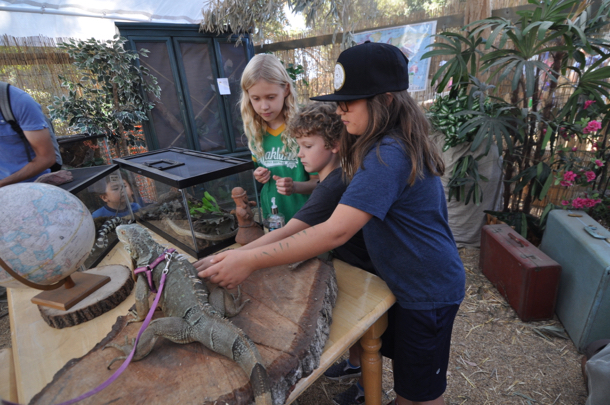 Post image for Horses to ride, reptiles to pet, slides to skitter down – all part of this year's Webb Ranch Pumpkin Patch