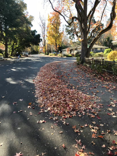 Post image for City of Menlo Park sets guidelines for fallen leaf removal