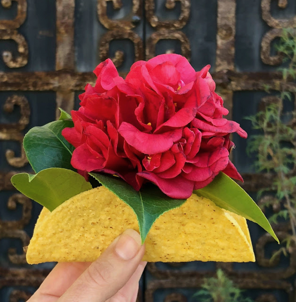 Post image for Here's a bouquet of Valentine's Day trivia (in a taco shell!)