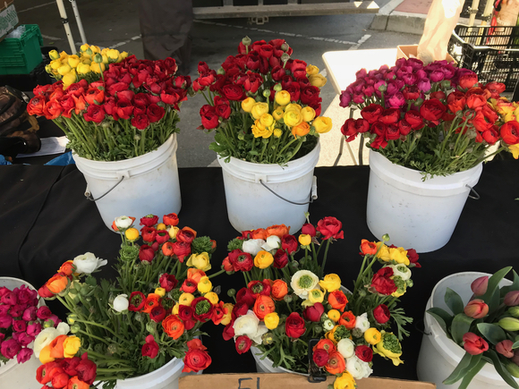 Post image for Spotted: Dazzling display of ranunculus at Menlo Park Farmers Market