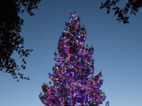 Spotted: A holiday tree that brightens spirits all year long