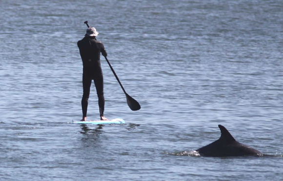 "Post image for ""Cetaceans of the Coast"" is topic at Menlo Park Library on June 25"