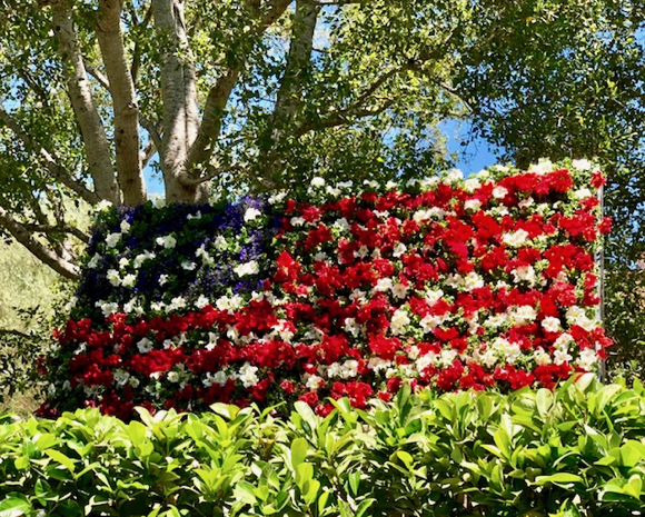 Post image for Pretty petunias make great 4th of July American flag