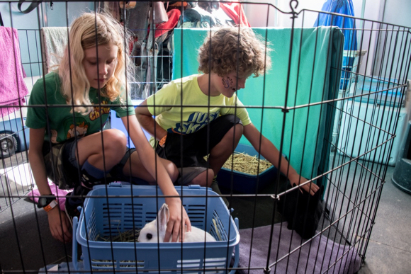 Kids and animals happily interact at Jasper Ridge Fun on the Farm Day