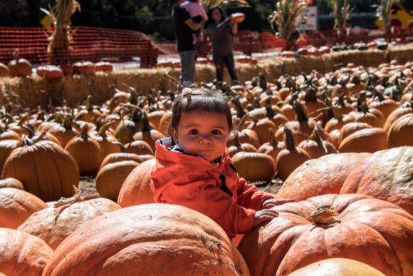 It's not Halloween without a visit to the Webb Ranch Pumpkin Patch