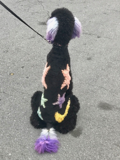 Post image for Spotted: Standard Poodle all decked out for Halloween