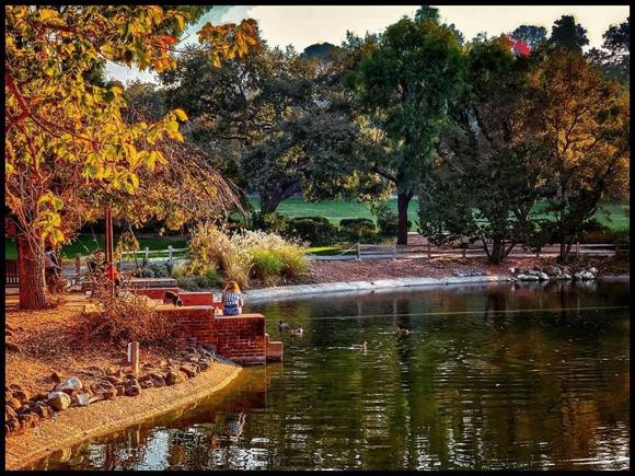 Spotted: Lake at Sharon Park sporting a fall hue