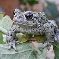 Post image for Meet reptiles and amphibians at Belle Haven branch of library on Dec. 16
