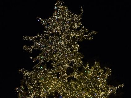 Opinion: Light the tree in Fremont Park