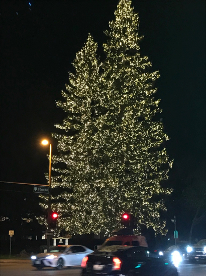 Post image for Spotted: Menlo Park's other lighted holiday trees