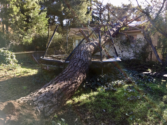 Pine tree falls on Atherton rooftop early Christmas morning