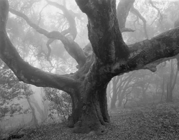 Photographer Alan McGee's landscape photographs seek to capture the human feeling behind the image