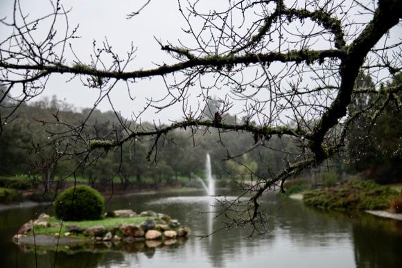 Yep, it's still raining in Menlo Park