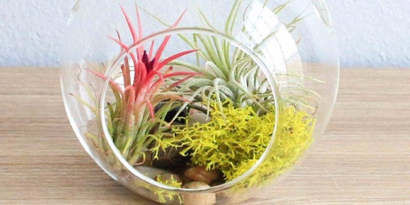 Make a plant terrarium at Menlo Park Library on July 9