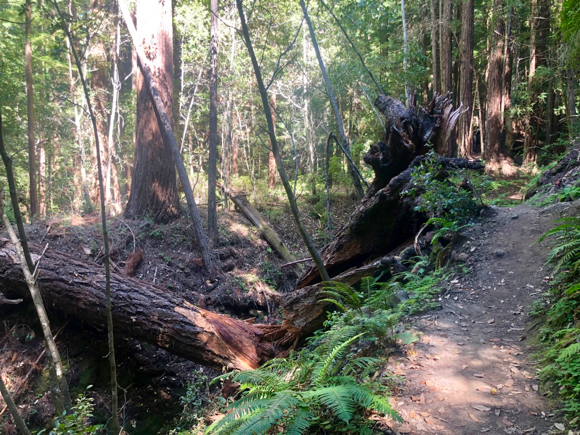 Weekend Wayfarer: Sam McDonald County Park