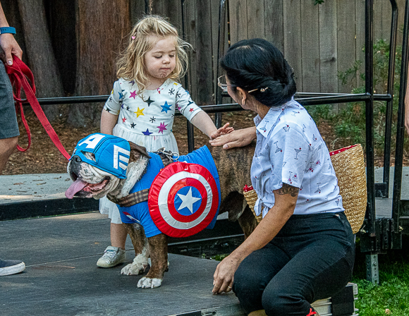 Dogs give it their all at first Mutt Strutt Super Heroes Dog Show in Menlo Park