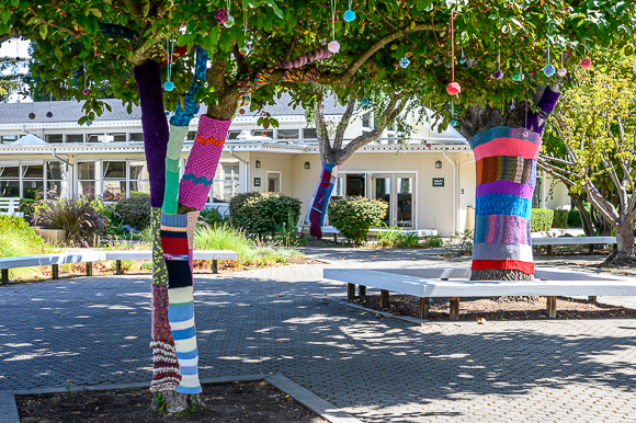 Yarn trees are festively decorating outdoor spaces at Trinity Church