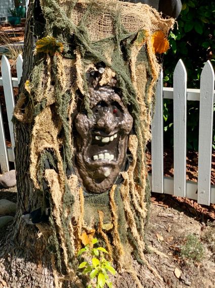 Spotted: Monster tree in Menlo Park