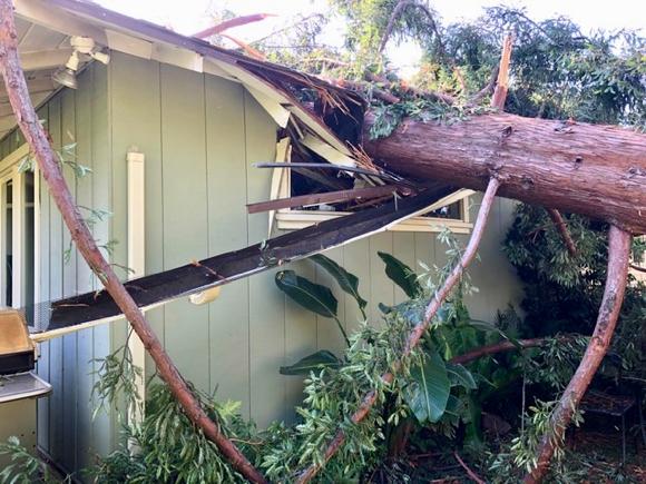 Huge tree falls on Menlo Park house, family unharmed