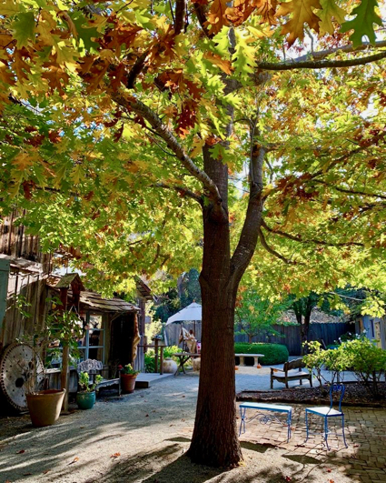 Capturing the beauty of Menlo Park in the fall