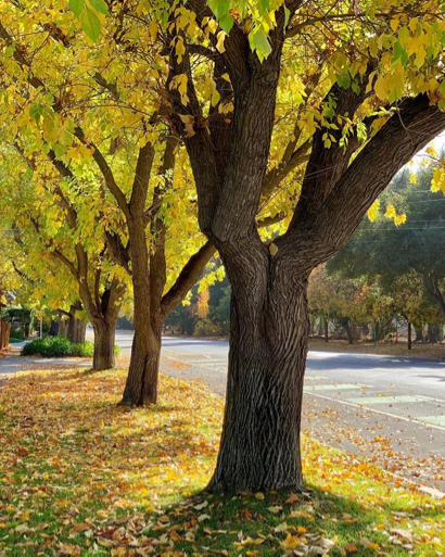 How to help keep Menlo Park streets clean during fall leaf season
