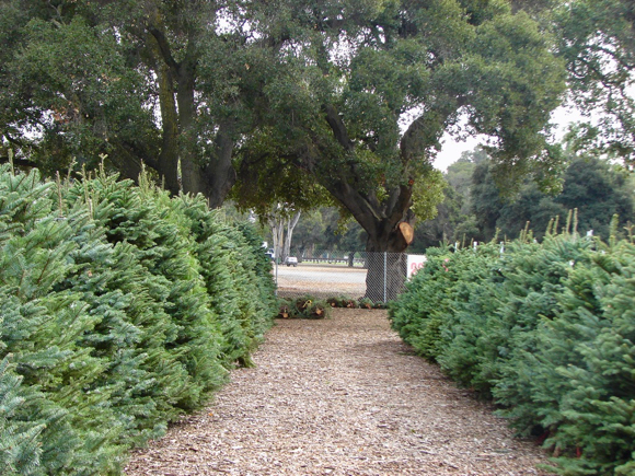 Menlo Park Kiwanis Christmas tree lot opens on November 29