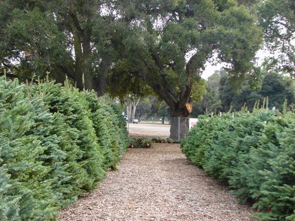 Menlo Park Kiwanis Christmas tree lot opens on November 29