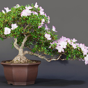 Learn how to start you own bonsai plant on Jan. 14