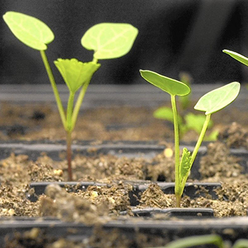 Get free seeds and advise about starting a garden on Feb. 5