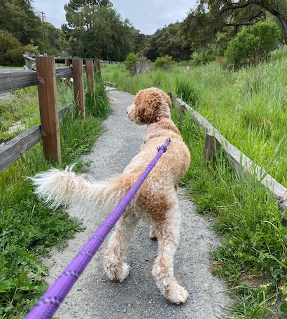 Pulgas Ridge Open Space Preserve an option for dog owners during the week