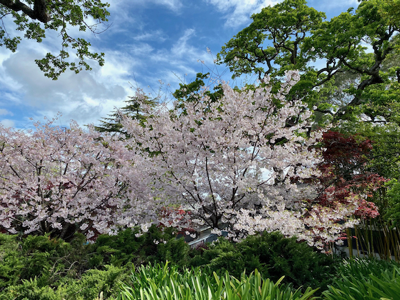 Spring blossoms and the Easter Bunny make for a festive walk in Menlo Park