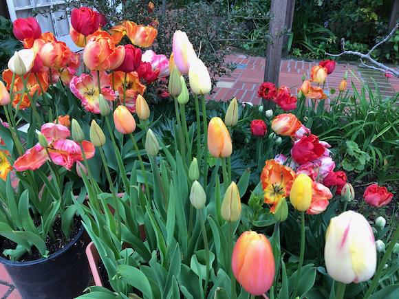 Neighborhood walking: Blooms in University Heights neighborhood