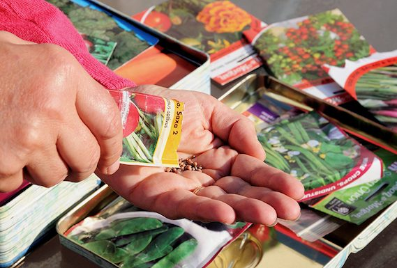 Seed swap at Menlo Park Library patio on October 23