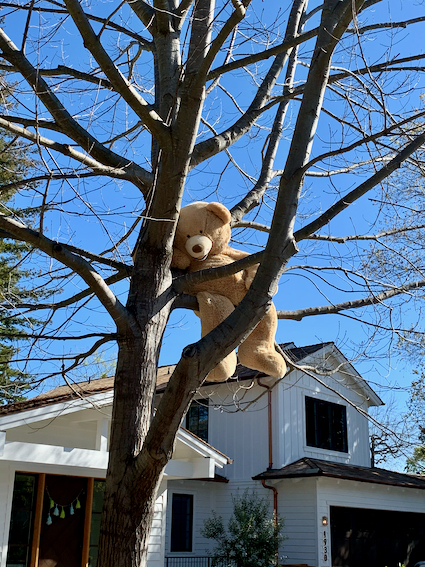Spotted: Big Teddy Bear in a tree on Oak Dell Drive