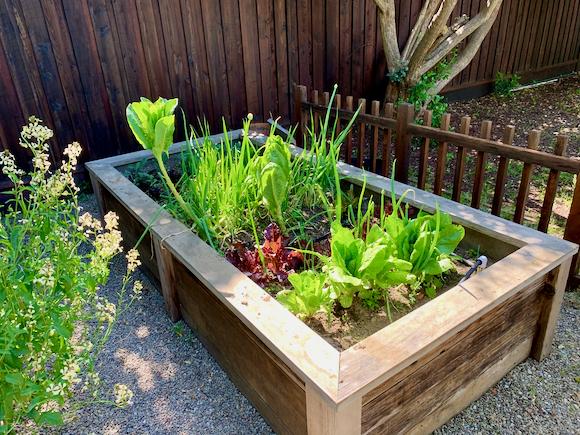 How does your garden grow, Steve Andrew?