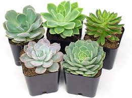 Gathering succulents for planter box at Cheeky Monkey