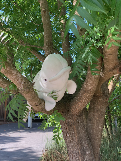 Spotted: A whale in a tree on Oakfield Dr. in Menlo Park