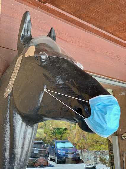 Spotted: Horse head with face mask and eye shield