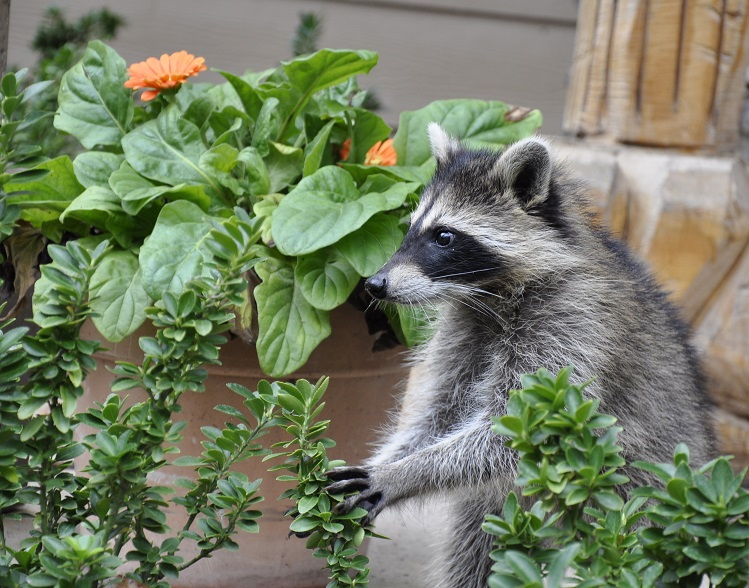 Joan Morris will talk about gardening with wildlife on July 20