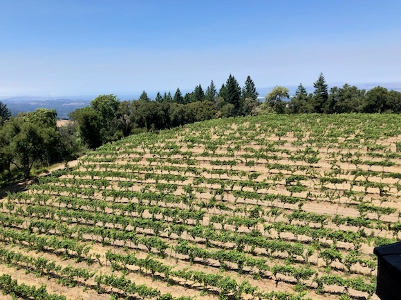 Thomas Fogarty Winery embraces the great outdoors for a variety of tasting options